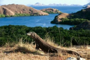 tour-pulau-komodo-bandung-wisata-Packages-Trip-Island-komodo