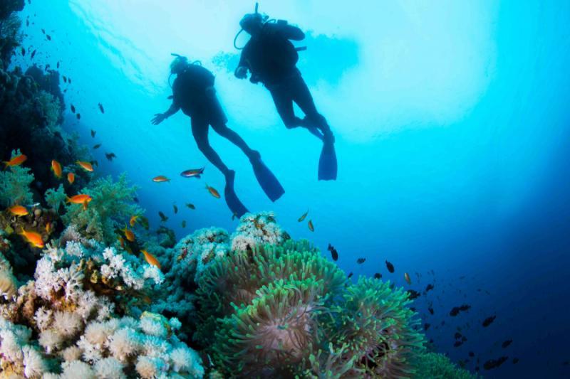 fiji_scuba_diving_view_0