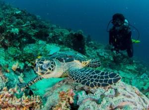 raja-ampat-turtles